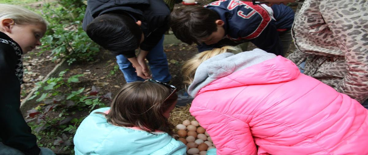 Kinderen leren over permacultuur